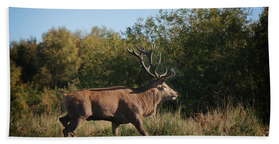 Antlers Hand Towel featuring the photograph Red Deer Stag by MSVRVisual Rawshutterbug