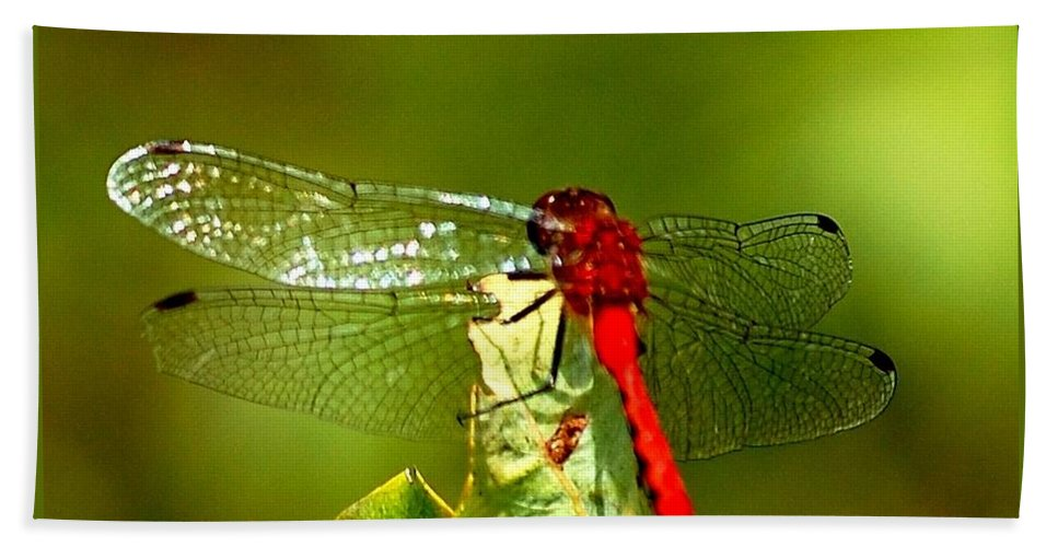 Digital Photograph Bath Towel featuring the photograph Red Dragon 2 by David Lane