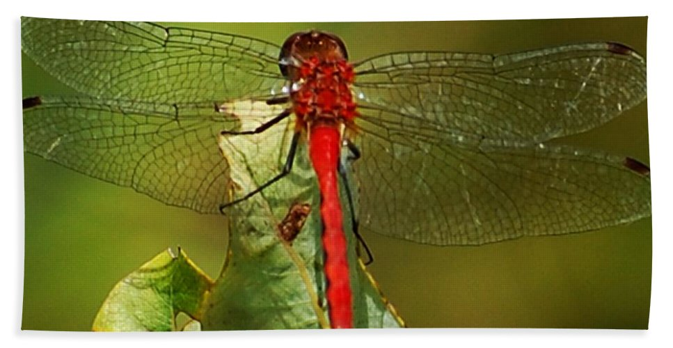Digital Photograph Hand Towel featuring the photograph Red Dragon Fly by David Lane