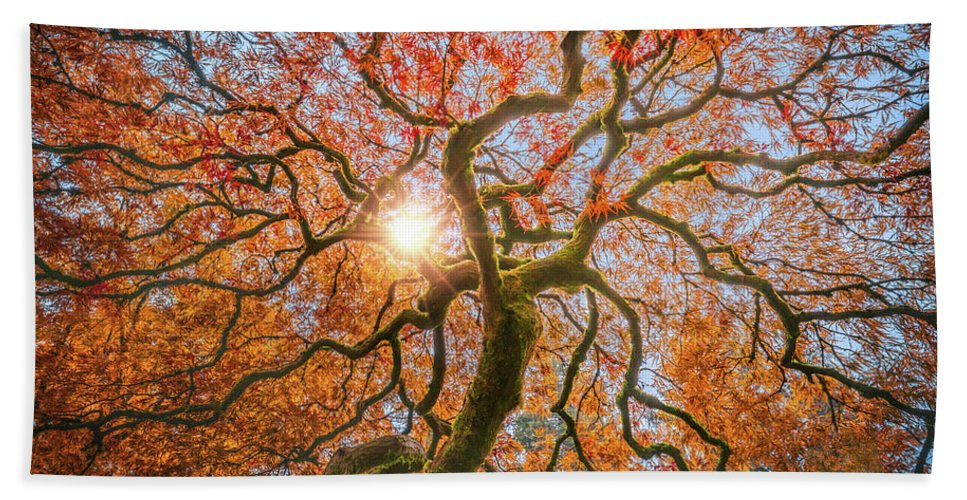 Sunlight Hand Towel featuring the photograph Red Dragon Japanese Maple In Autumn Colors by William Freebilly photography