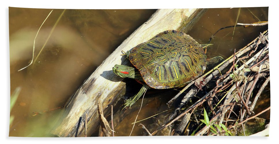 Nature Bath Sheet featuring the photograph Red-eared Slider by Alan Look