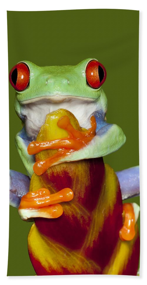 Frog Hand Towel featuring the photograph Red Eyed Delight by Janet Fikar