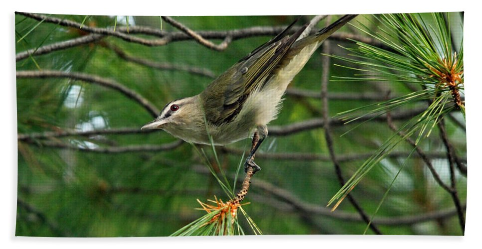 Red Eyed Vireo Hand Towel featuring the photograph Red Eyed Vireo by Debbie Oppermann