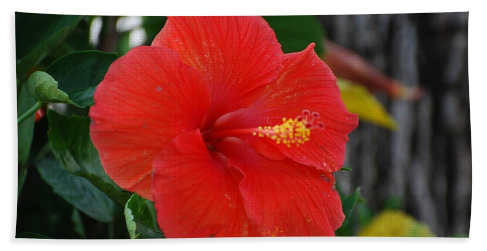 Flowers Bath Towel featuring the photograph Red Flower by Rob Hans