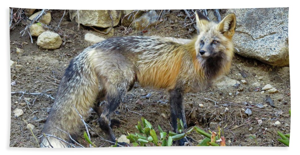 Fox Hand Towel featuring the photograph Red Fox by Cindy Murphy - NightVisions