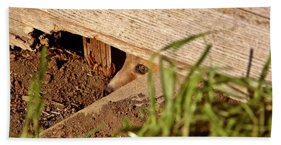 Red Fox Hand Towel featuring the digital art Red Fox Kit Peaking Out From Den Under Old Granary by Mark Duffy