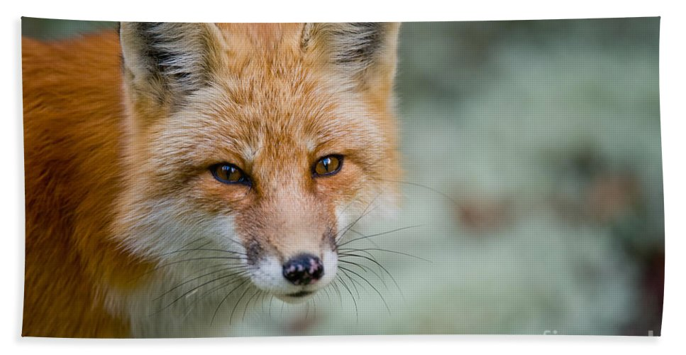 Red Fox Hand Towel featuring the photograph Red Fox Pictures 146 by World Wildlife Photography