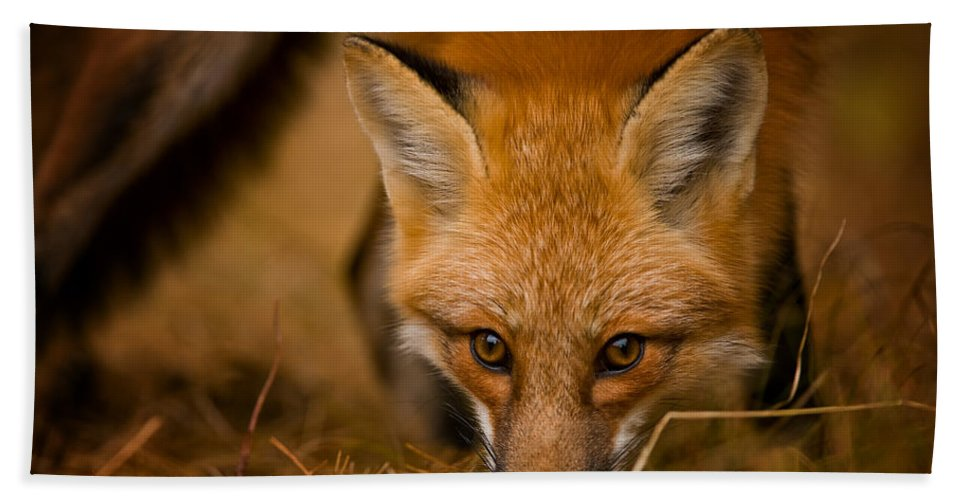 Red Fox Hand Towel featuring the photograph Red Fox Pictures 162 by World Wildlife Photography