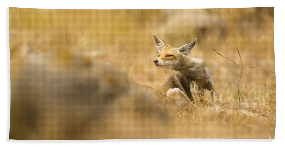 Alertness Bath Sheet featuring the photograph Red Fox Vulpes Vulpes by Alon Meir
