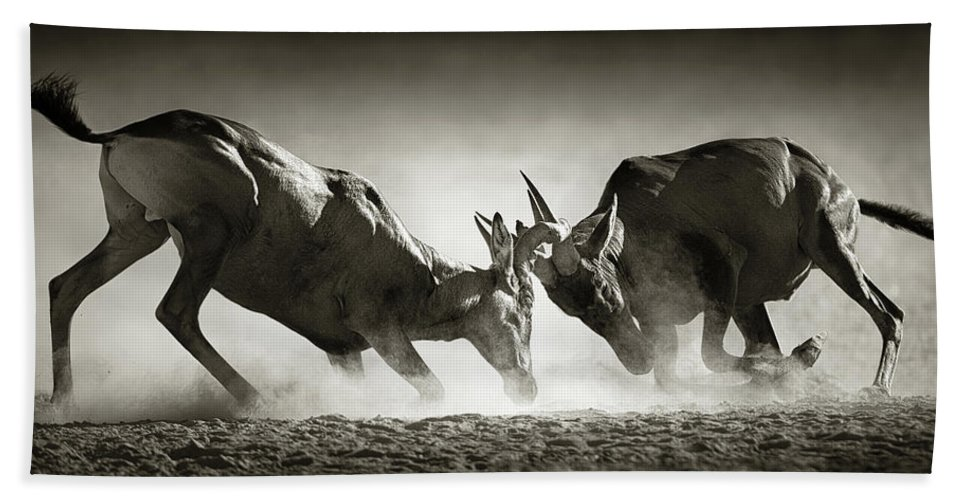 Hartebeest Hand Towel featuring the photograph Red Hartebeest Dual In Dust by Johan Swanepoel