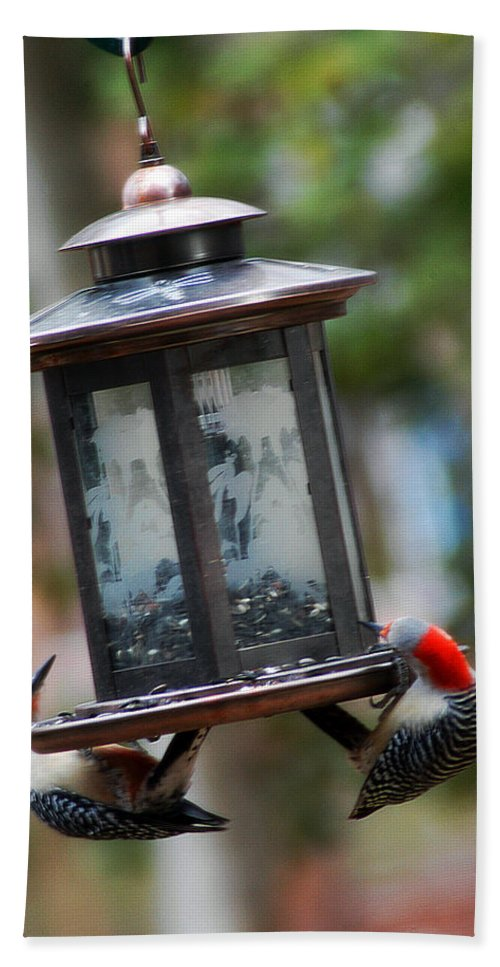 Clay Hand Towel featuring the photograph Red Head Wood Peckers On Feeder by Clayton Bruster