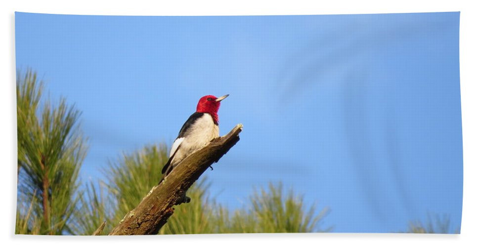 Birds Hand Towel featuring the photograph Red-headed Woodpecker by Charles Green