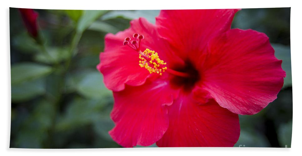 Photography Bath Sheet featuring the photograph Red Hibiscus by Daniel Knighton