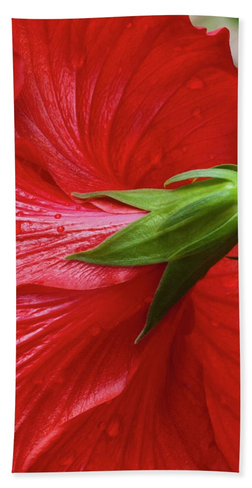 Red Bath Sheet featuring the photograph Red Hibiscus by Dennis Reagan