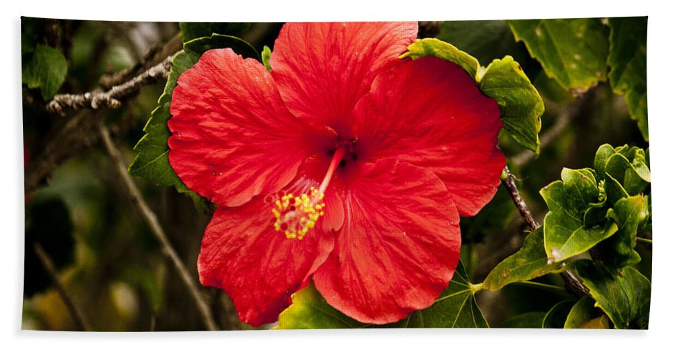 Flower Hand Towel featuring the photograph Red Hibiscus by Donna Walsh
