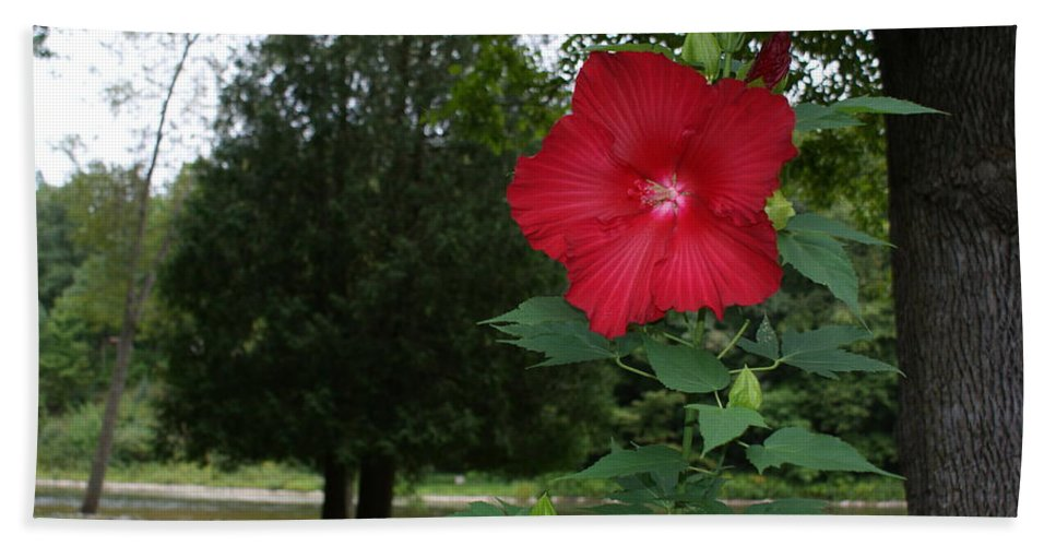 Hardy Hand Towel featuring the photograph Red Hibiscus Highlights A Scene On The River by Holly Eads