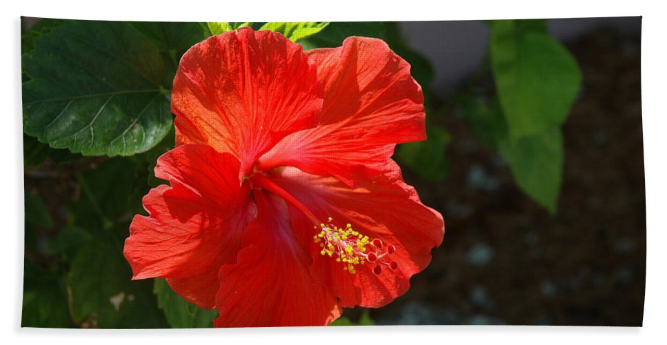 Hibiscus Bath Sheet featuring the photograph Red Hibiscus II by Susanne Van Hulst