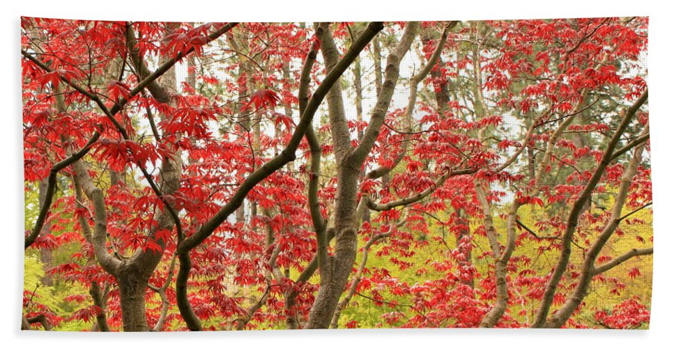 Leaves Bath Sheet featuring the photograph Red Maple Leaves And Branches by Carol Groenen