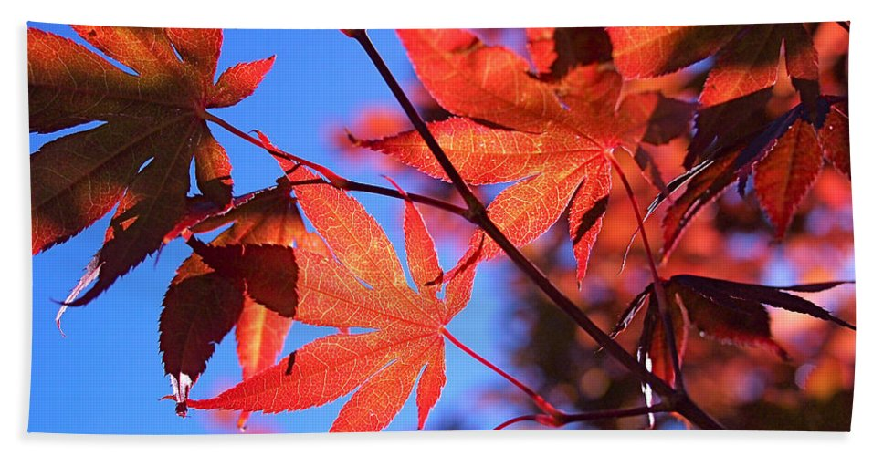 Japanese Maple Bath Sheet featuring the photograph Red Maple by Rona Black