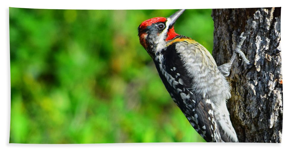 Red-naped Sapsucker Hand Towel featuring the photograph Red-naped Sapsucker by Alan C Wade