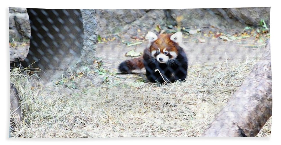 Hand Towel featuring the photograph Red Panda Cub by Rocky Washington