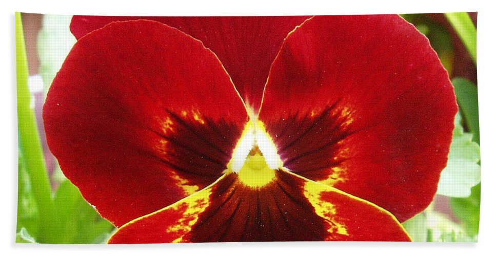 Red Bath Towel featuring the photograph Red Pansy by Nancy Mueller