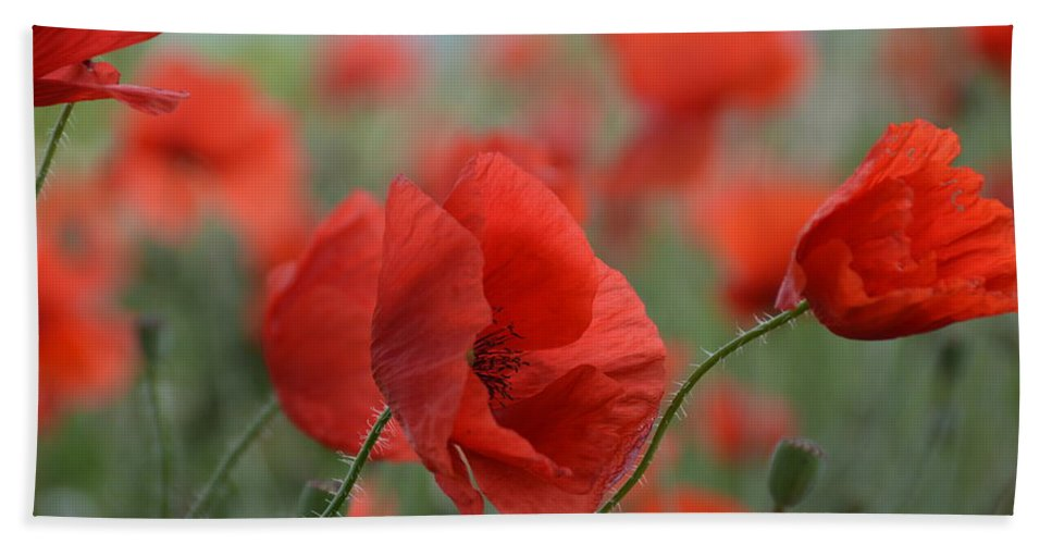 Nature Hand Towel featuring the photograph Red Poppies Blooming by Lena Photo Art