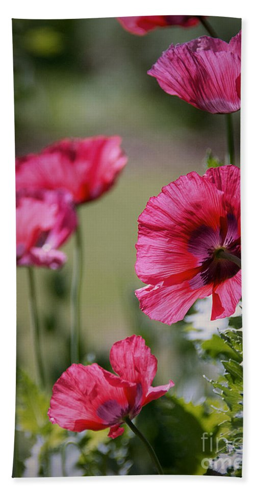 Red Hand Towel featuring the photograph Red Poppies by Lisa L Silva