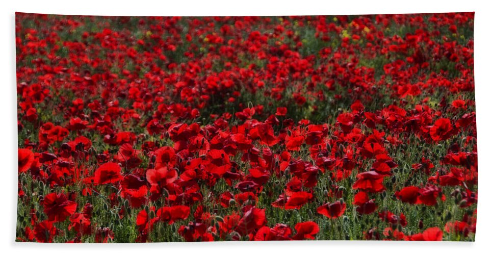 Bloom Bath Sheet featuring the photograph Red Poppies by Svetlana Sewell