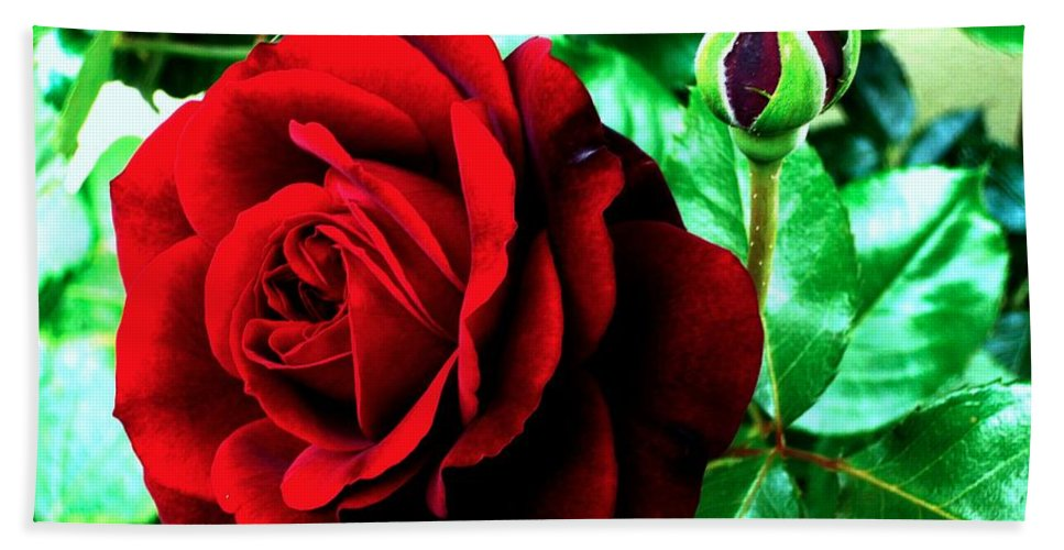 Hand Towel featuring the photograph red Rose by Helmut Rottler