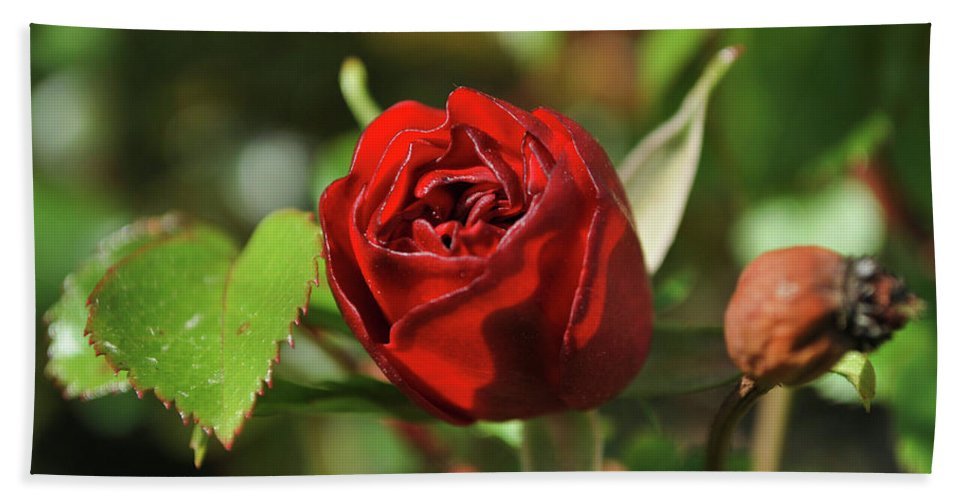Rose Bath Sheet featuring the photograph Red Rose by Ignacio Leal Orozco