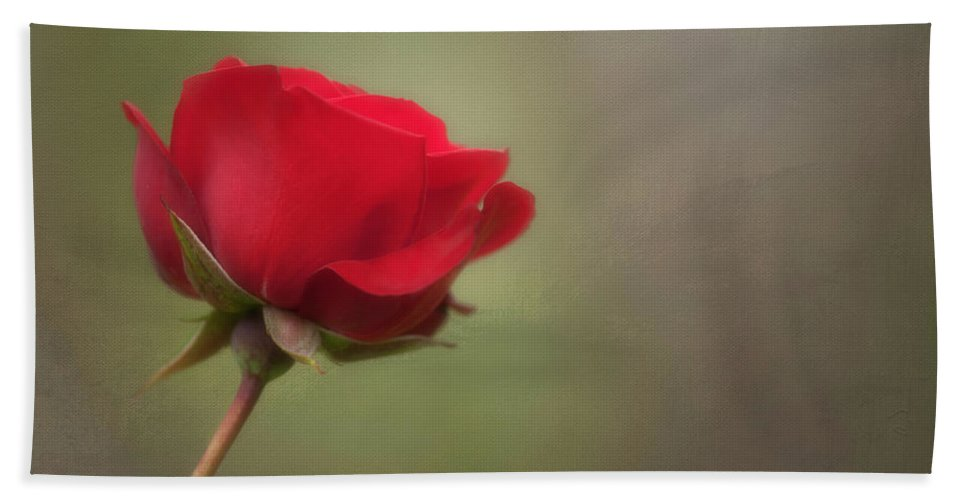 Red Rose Bath Sheet featuring the photograph Red Rose by Jacqui Boonstra