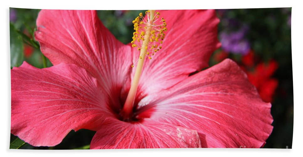 Hibiscus Hand Towel featuring the photograph Red Rose Of Sharon by Christiane Schulze Art And Photography