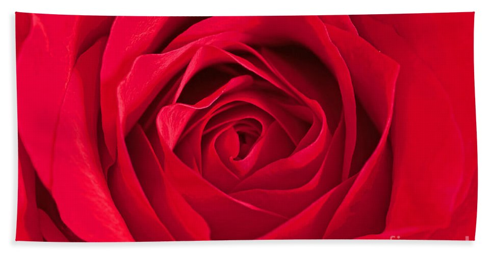 Red Rose Bath Sheet featuring the photograph Red Rose by Regina Geoghan
