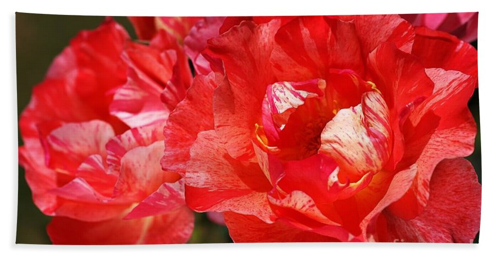Rose Hand Towel featuring the photograph Red Rose With A Whisper Of Yellow by Joy Watson