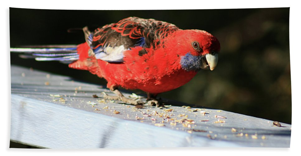 Red Rosella Hand Towel featuring the photograph Red Rosella by Douglas Barnard