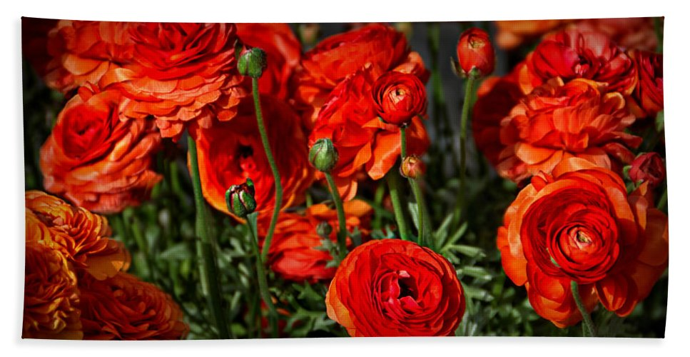 Delicate Bath Sheet featuring the photograph Red Roses by Catherine Melvin