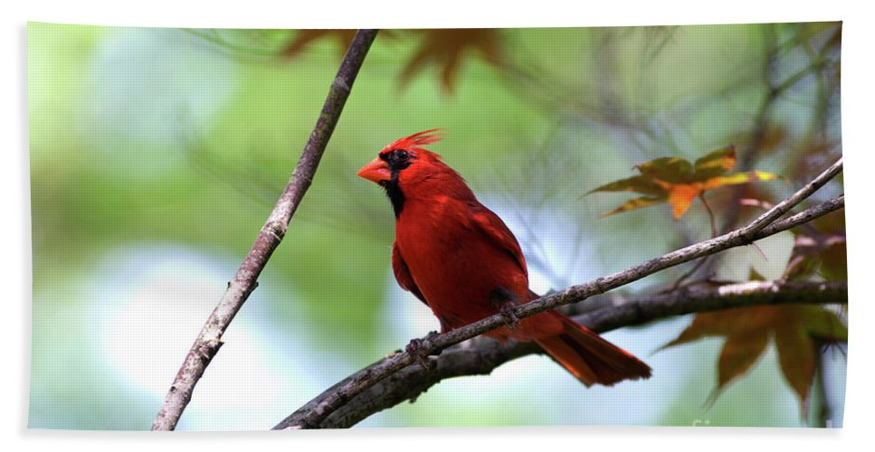 Animal Bath Sheet featuring the photograph Red Sentry by Alan Look