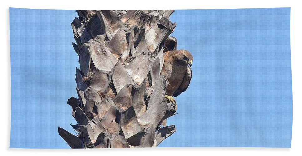Linda Brody Hand Towel featuring the photograph Red Shouldered Hawk On Palm Tree by Linda Brody