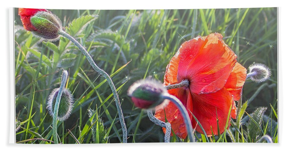 Poppy Bath Sheet featuring the photograph Red Sparkle by Nick Eagles