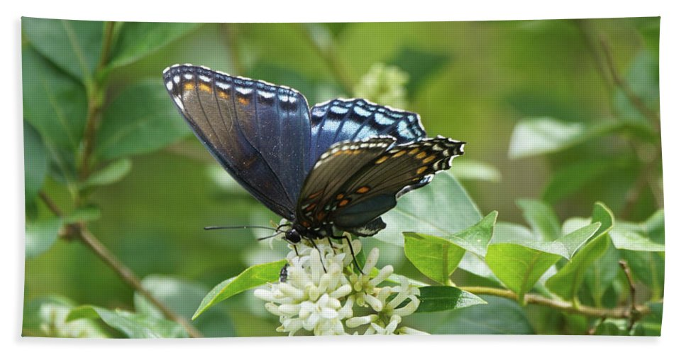 Red-spotted Purple Butterfly Bath Sheet featuring the photograph Red-spotted Purple Butterfly On Privet Flowers by Robert E Alter Reflections of Infinity