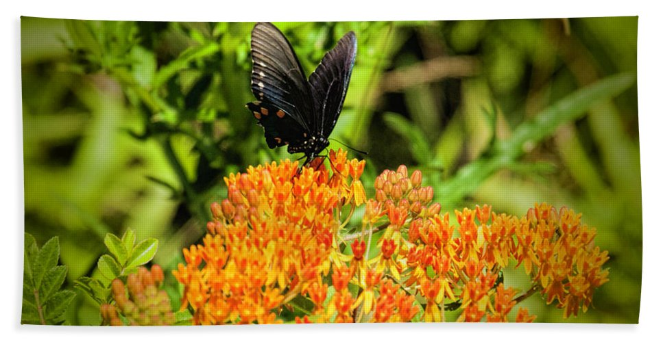 Red Spotted Purple Butterfly Bath Sheet featuring the photograph Red Spotted Purple Butterfly by Phyllis Taylor