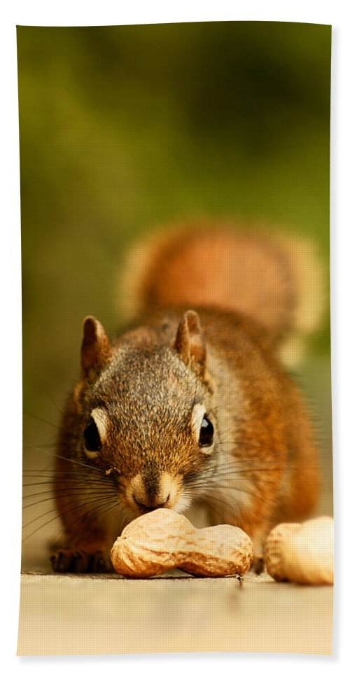 Red Squirrel Bath Sheet featuring the photograph Red Squirrel  by Cale Best
