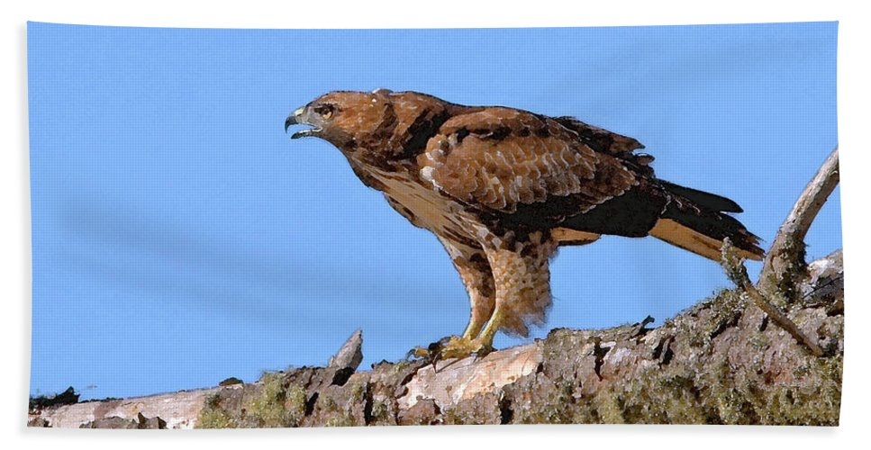 Red-tailed Hawk Bath Sheet featuring the photograph Red-tailed Hawk by Betty LaRue
