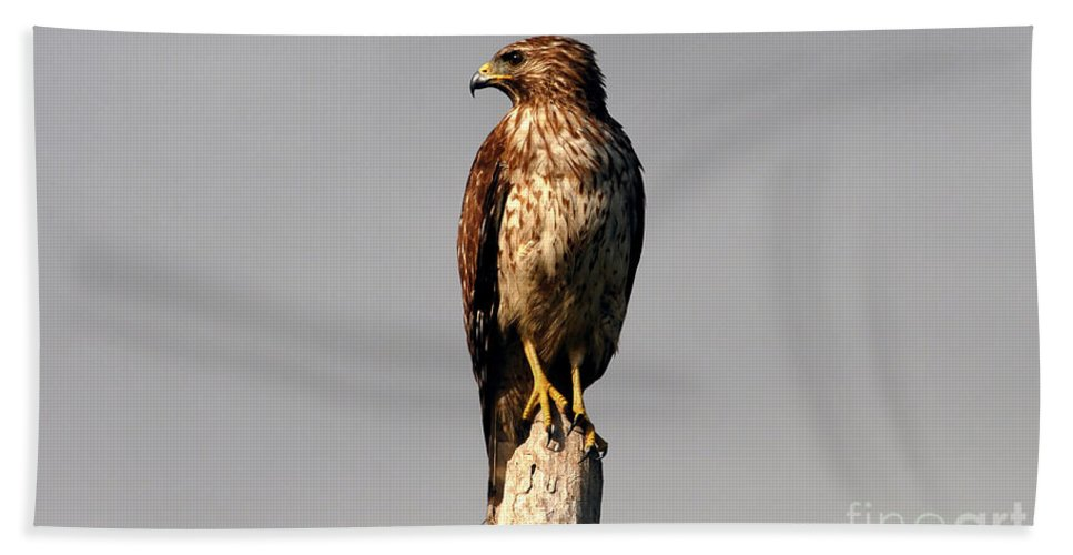 Red Tailed Hawk Bath Towel featuring the photograph Red Tailed Hawk by David Lee Thompson