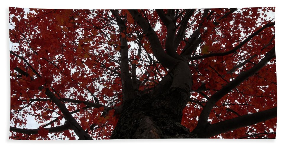 Fall Bath Towel featuring the photograph Red Tree by David Lee Thompson