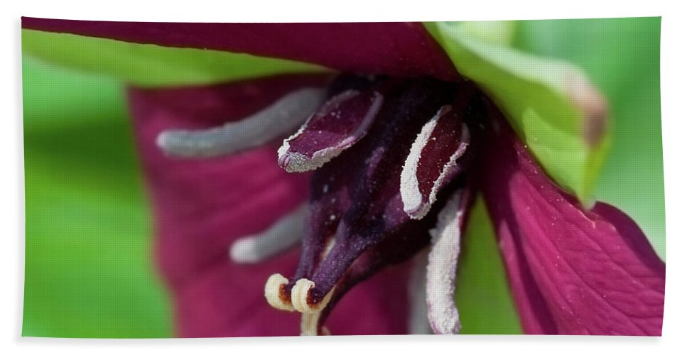 Festblues Hand Towel featuring the photograph Red Trillium.. by Nina Stavlund