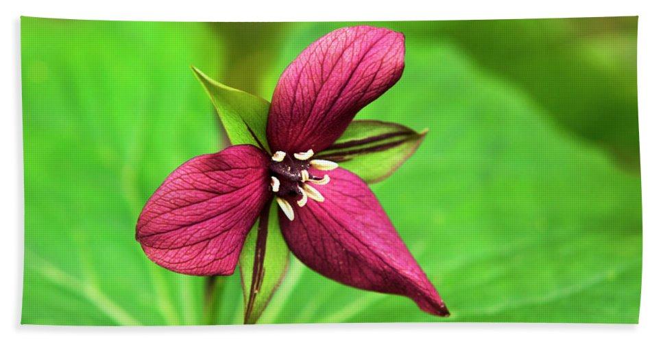 Trillium Bath Sheet featuring the photograph Red Trillium Wildflower by Christina Rollo
