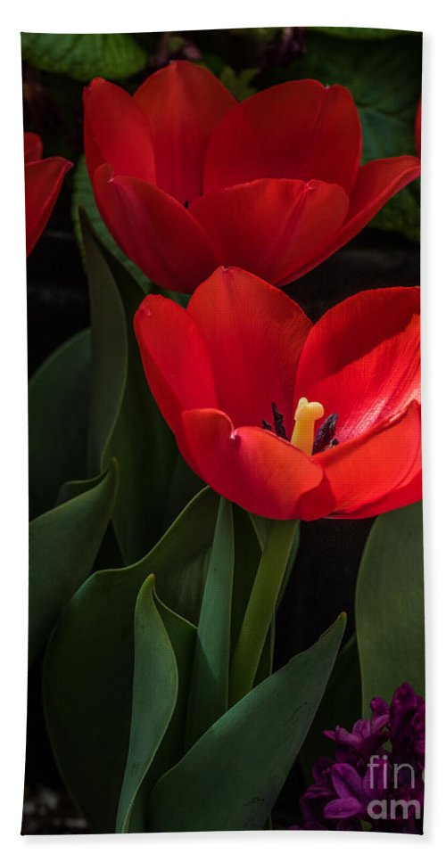 Tulip Bath Sheet featuring the photograph Red Tulip by Darleen Stry