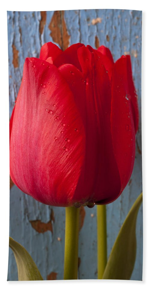 Red Bath Sheet featuring the photograph Red Tulip by Garry Gay